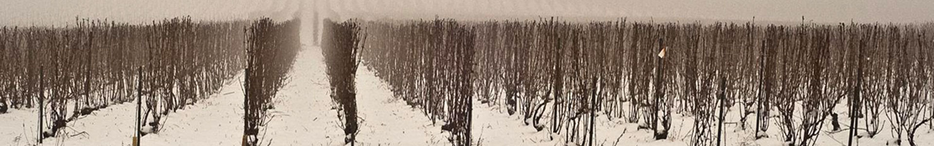 bannière vigne avec sol enneigé
