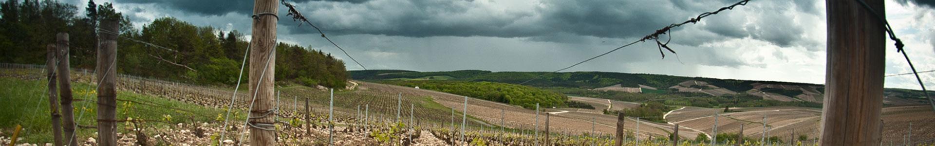 bannière vigne sous ciel orageux